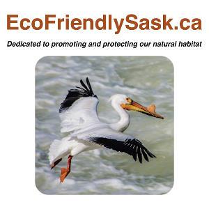 ecofriendlysask-logo